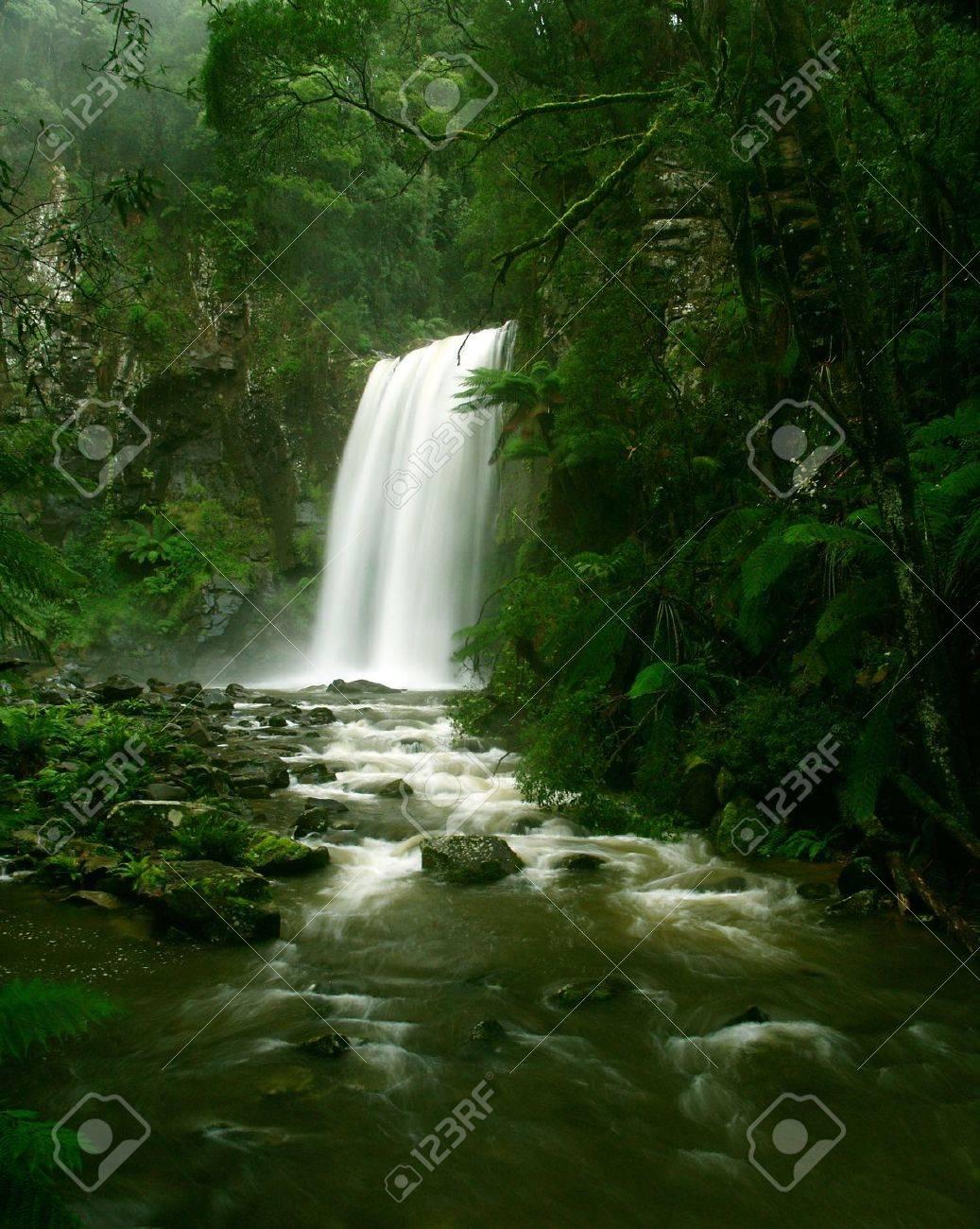 Waterfall in Rainforest, Victoria, Otway National Park, Australia Stock Photo - 13554652