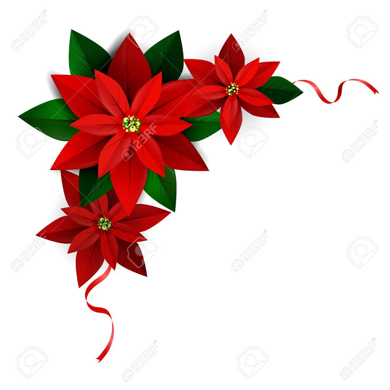 Christmas corner decoration on white Poinsettia with ribbons Vector for you design - 66798320