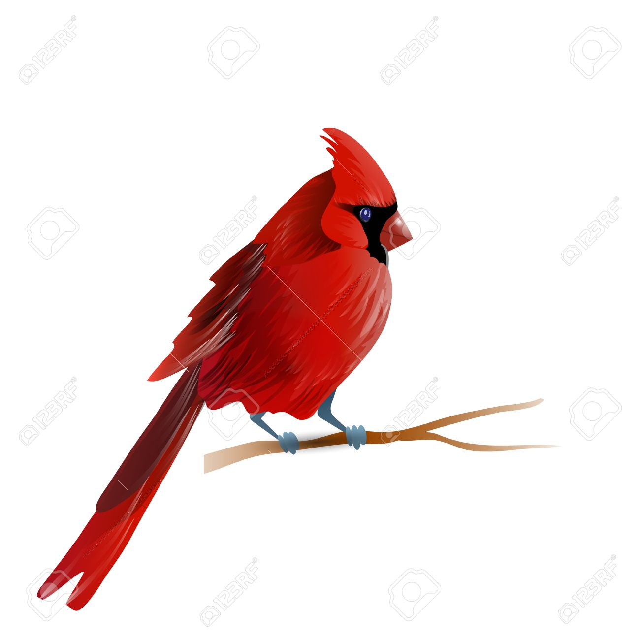 Vector Illustration Of Red Cardinal Bird Isolated On White Royalty