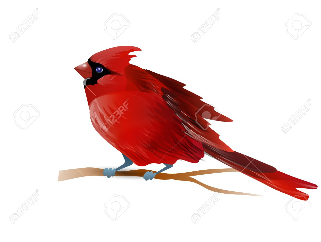 Vector Illustration D Oiseau Cardinal Rouge Isole Sur Blanc Banque D Images Et Photos Libres De Droits Image 67405764