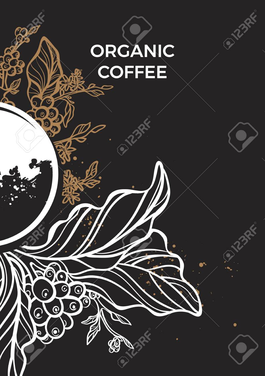 Ramo De Cafe Com Folhas Flores E Graos De Cafe Desenho Botanico
