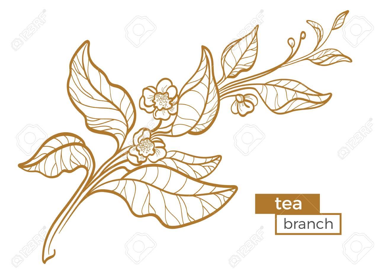 Vettoriale Ramo Di Cespuglio Di Tè Con Foglie E Fiori Disegno Di