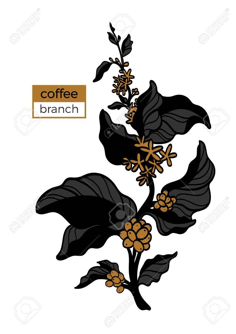 Vorlage Der Farbe Zweig Der Kaffeebaum Mit Blättern, Blumen Und ...