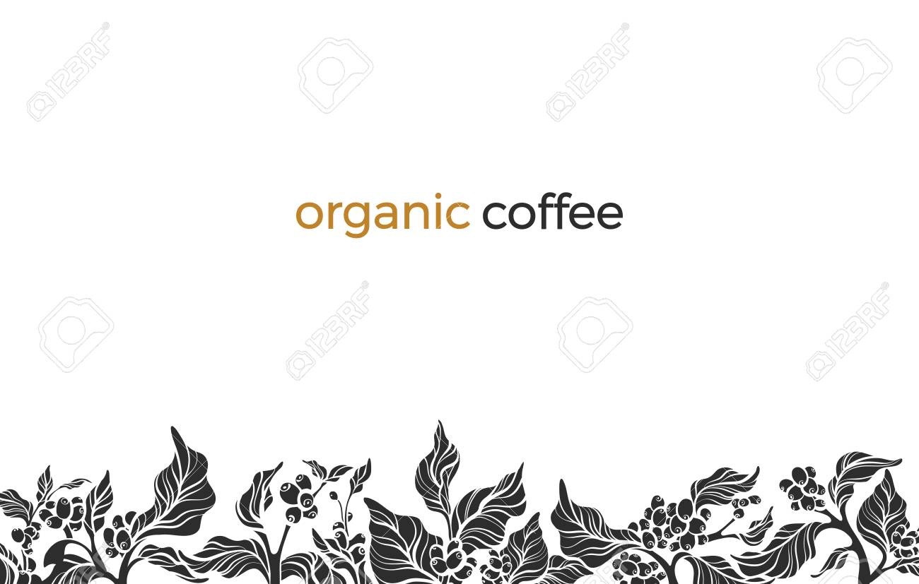 Trendy Vector Border With Elegant Coffee Branch Leaf Bean Flower Nature Template On White Background Floral Shape Silhouette Design Simple Frame Frieze Border Hand Drawn Illustration Copy Space Royalty Free Cliparts Vectors