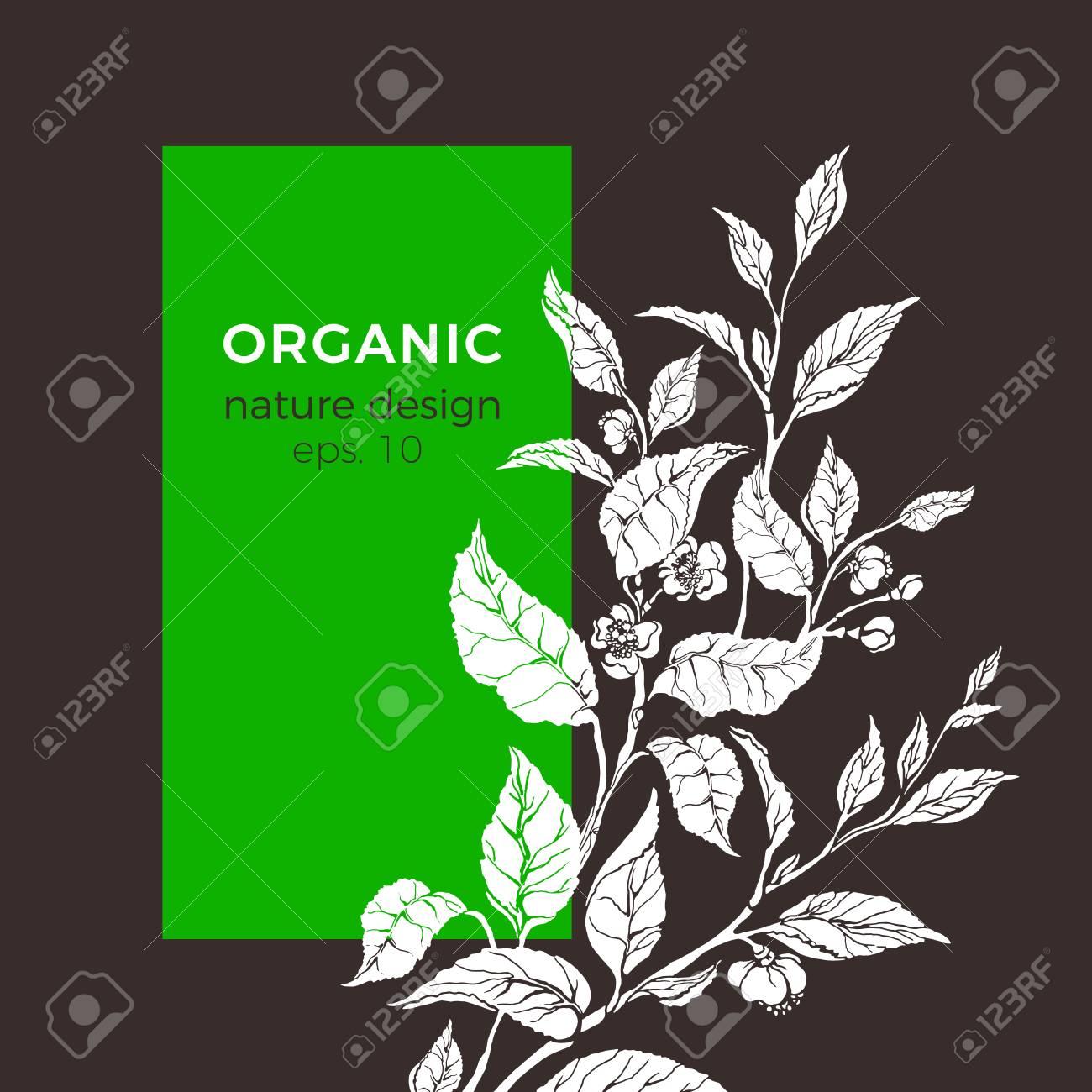 vector floral illustration with tea leaf flower botanical shape