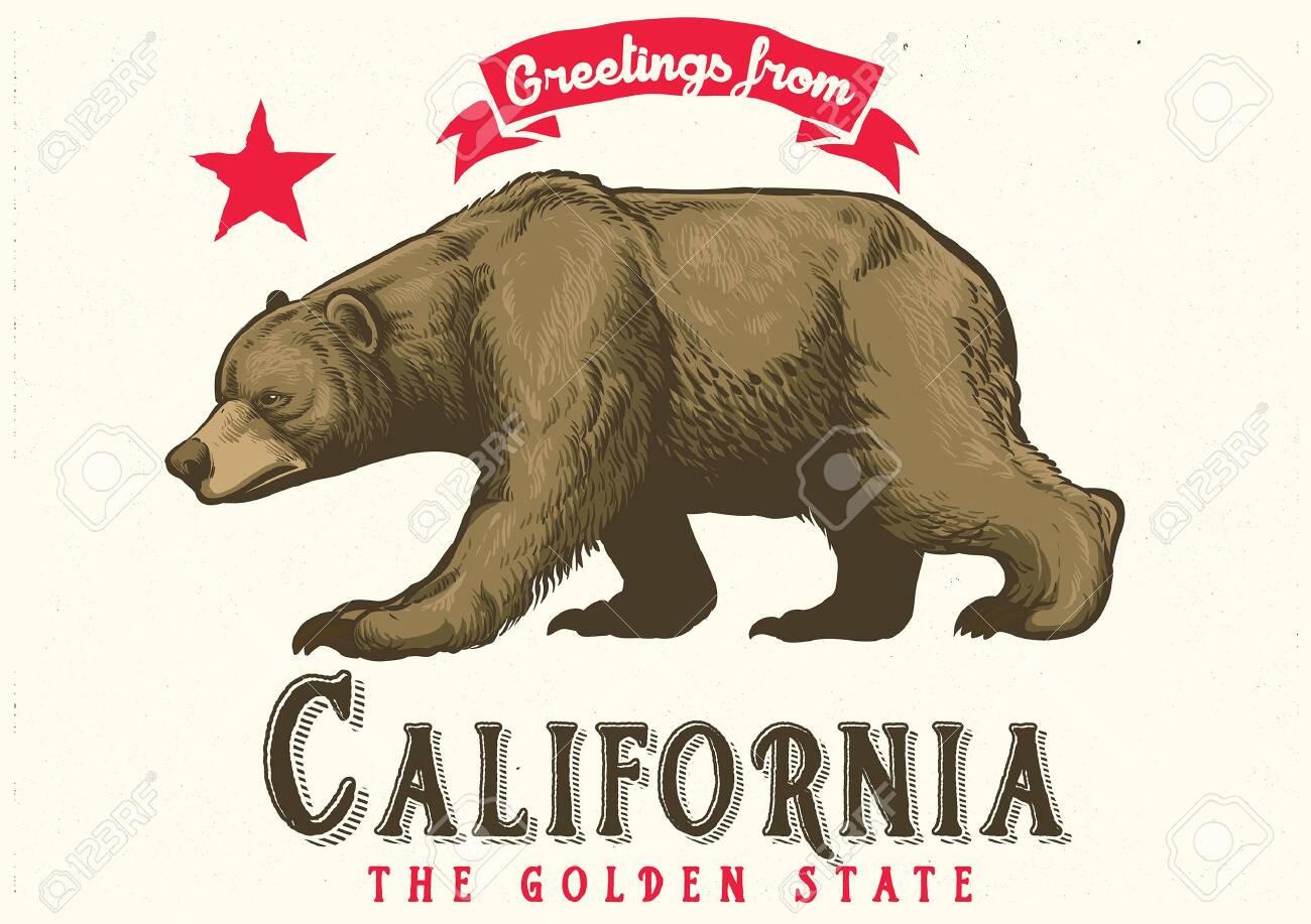 hand drawn of californian brown bear - 126488571