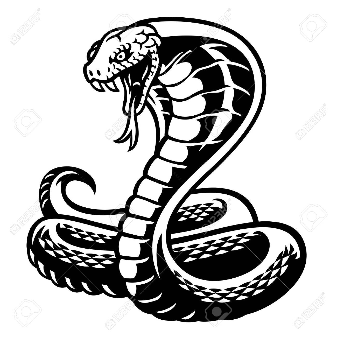 black and white of cobra snake royalty free cliparts vectors and stock illustration image 137056908 black and white of cobra snake royalty free cliparts vectors and stock illustration image 137056908