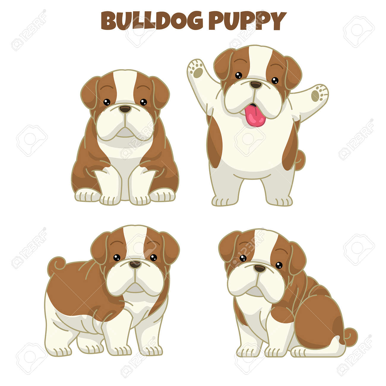 set cute bulldog puppy - 163987822