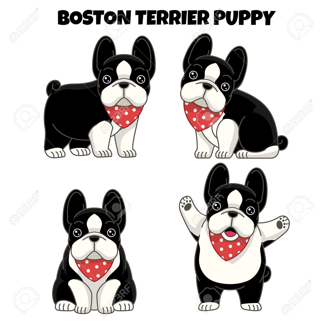 vector set of boston terrier puppy dog - 163987823