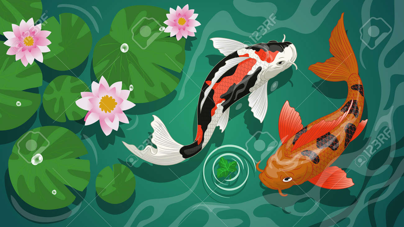 vector of koi fishes swiming in the pond - 163540730