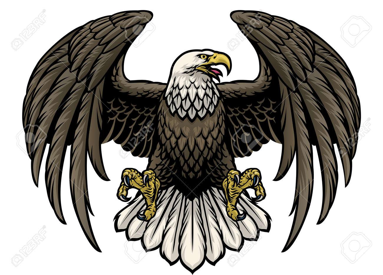 vector of hand drawn bald eagle - 171104015
