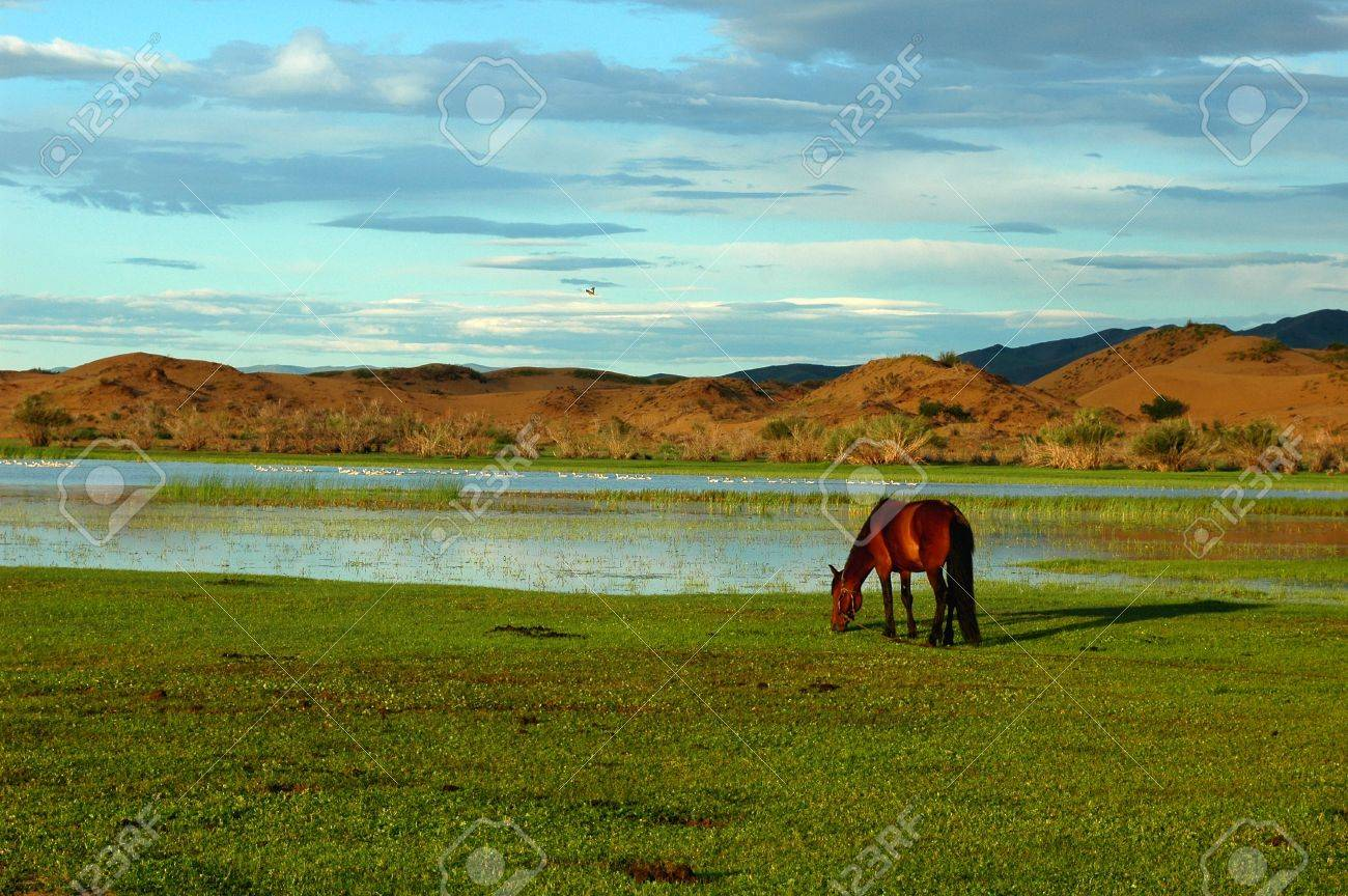 Landscape of horses on the grasslands of Mongolia Stock Photo - 8547459