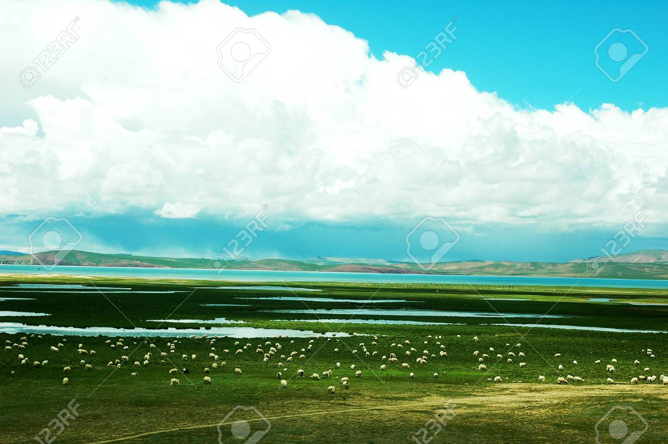 Landscape of green meadows with sheep and lakes Stock Photo - 9943737