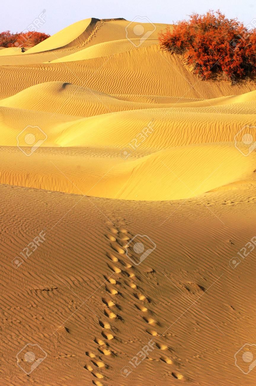 Landscape of desert Stock Photo - 13850560