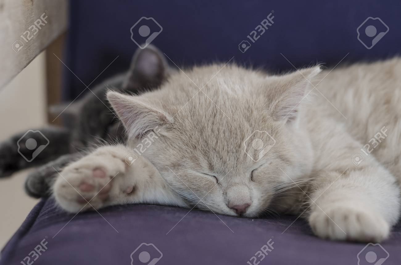 Two Cute Cats Kittens Sleeping Together Stock Photo Picture And