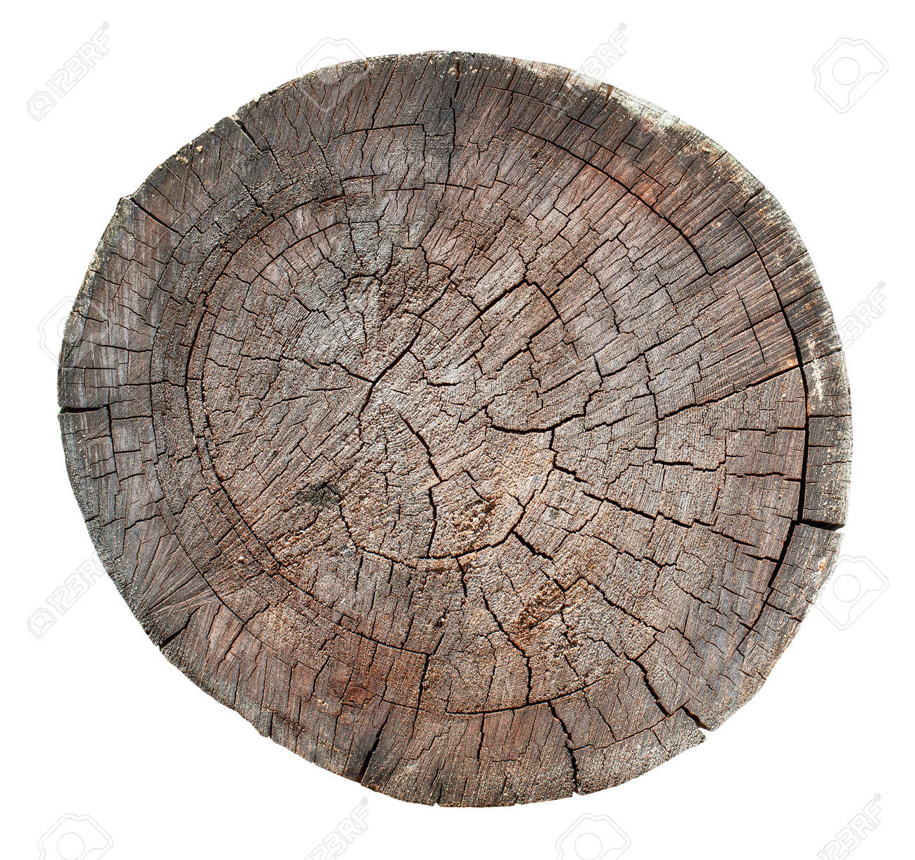 The Wooden old stump, wood texture background isolate on white - 157440734