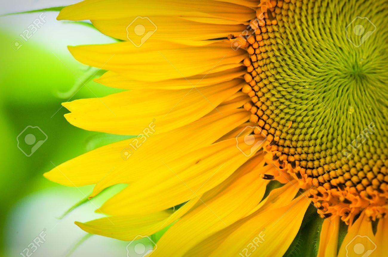 Nature Photo of the Week Macro Sunflower Conservancy Talk
