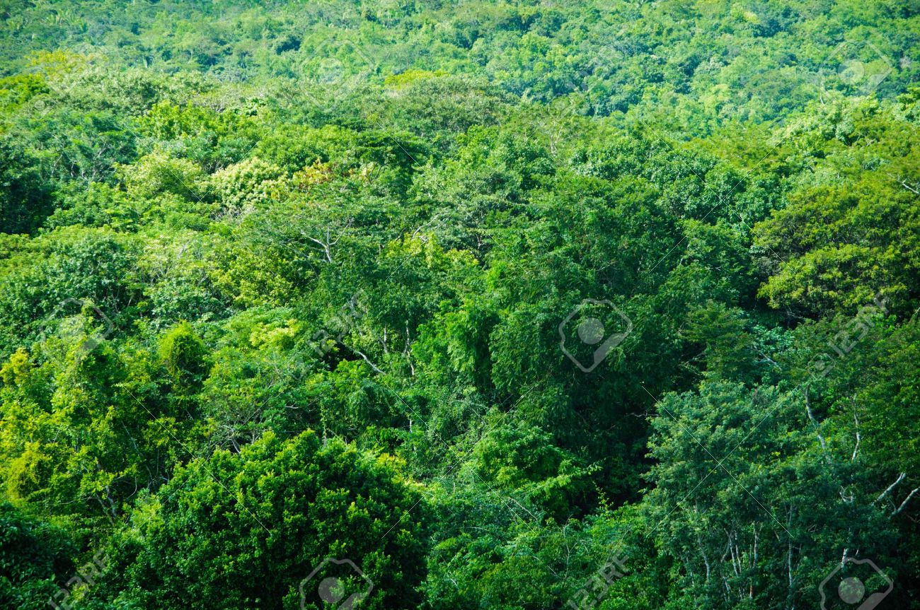 tropical rainforest background stock photo picture and royalty free