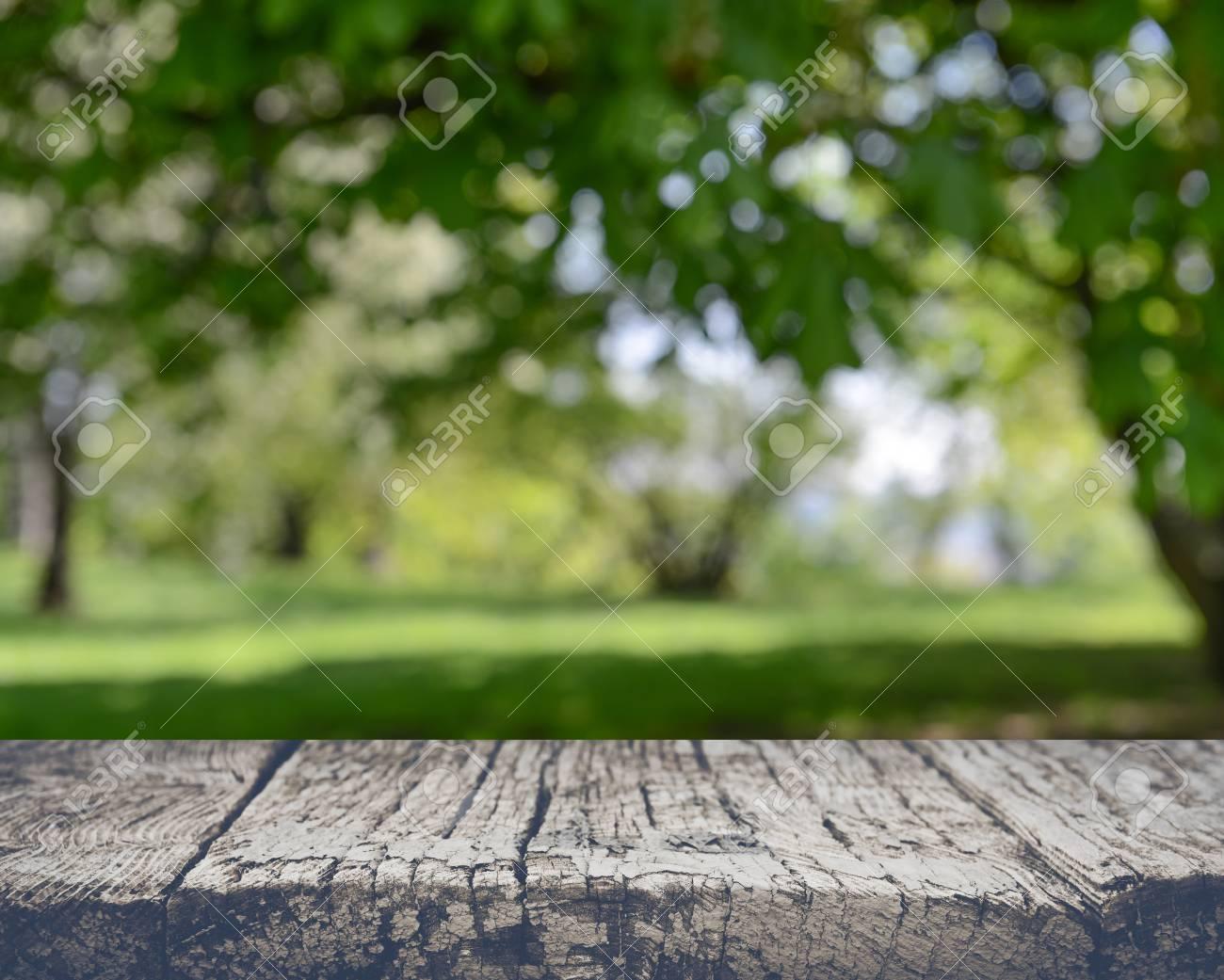 Blurred Nature Background - 55007860