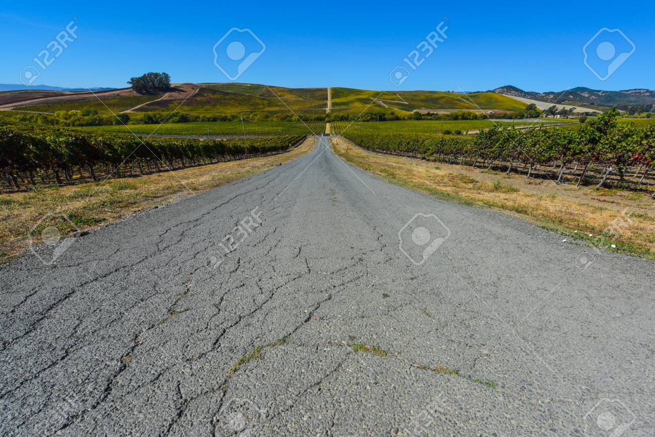 Vineyard in Napa Valley California - 63468207