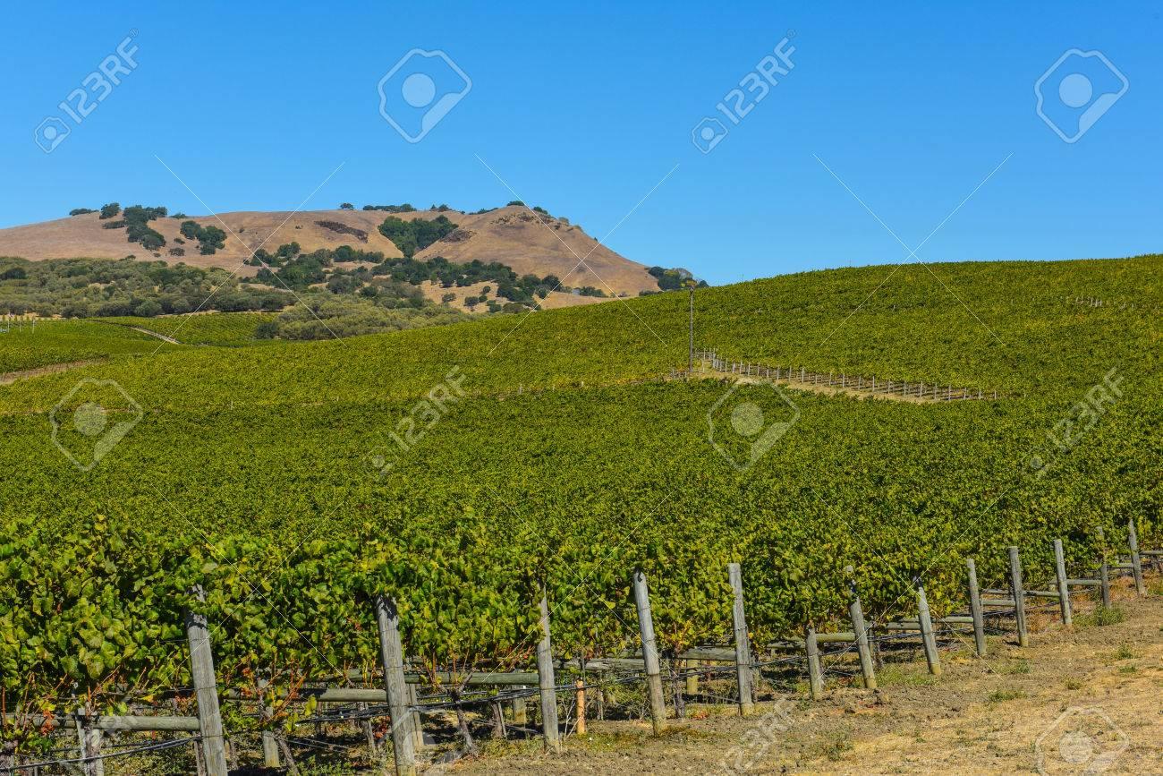 Napa Valley Vineyard - 63468243