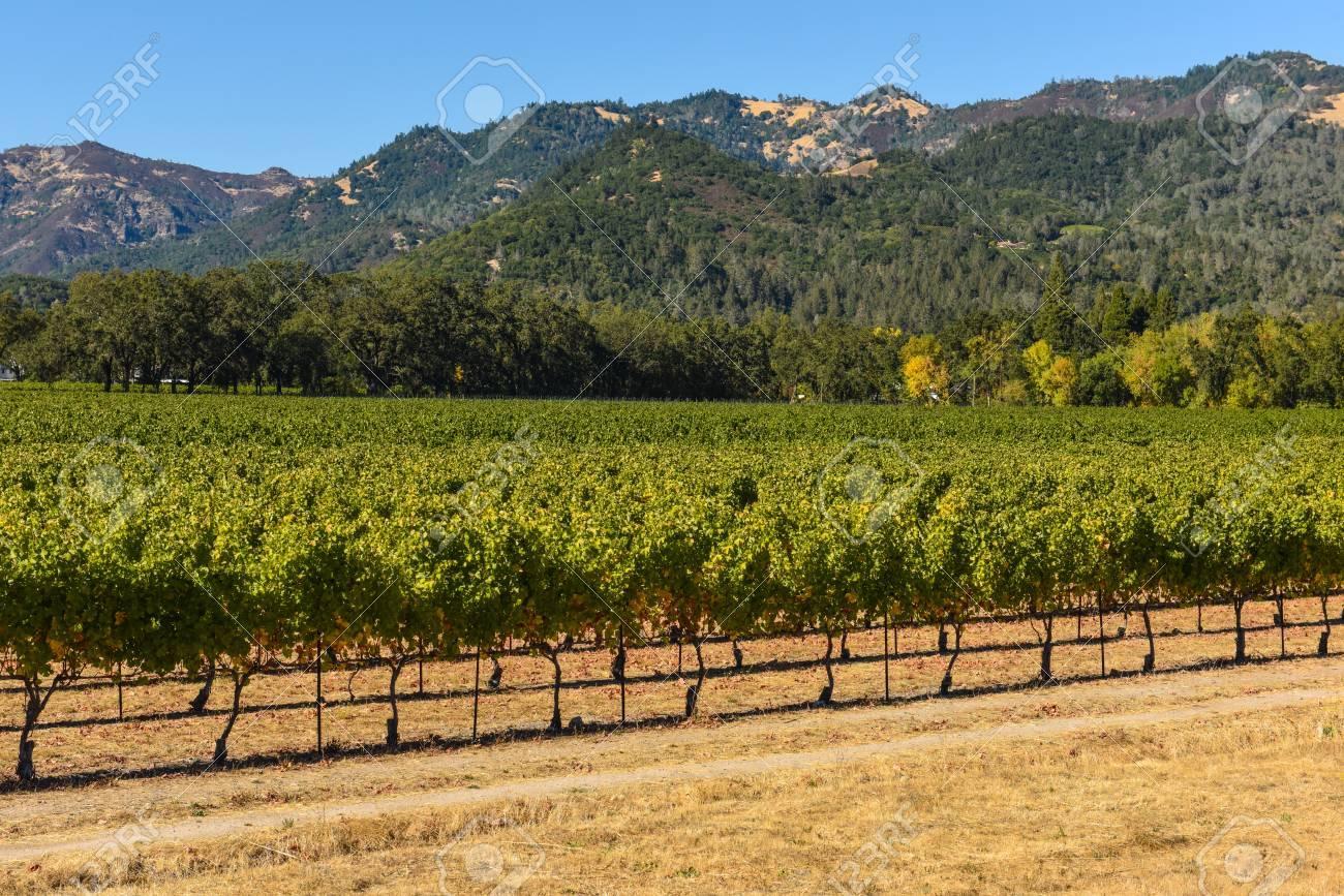 Napa Valley California Vineyard - 63468268