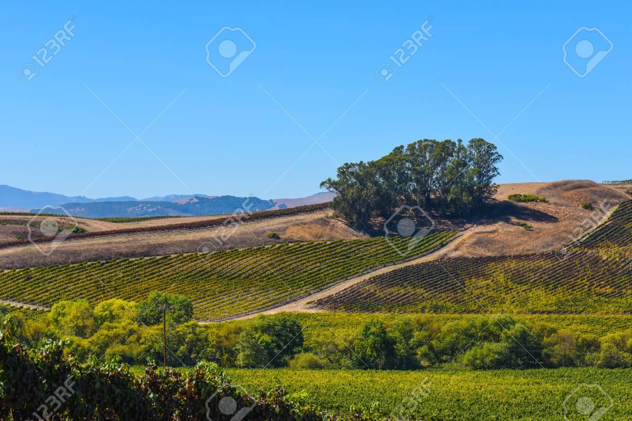 Napa Valley Vineyard - 63468269