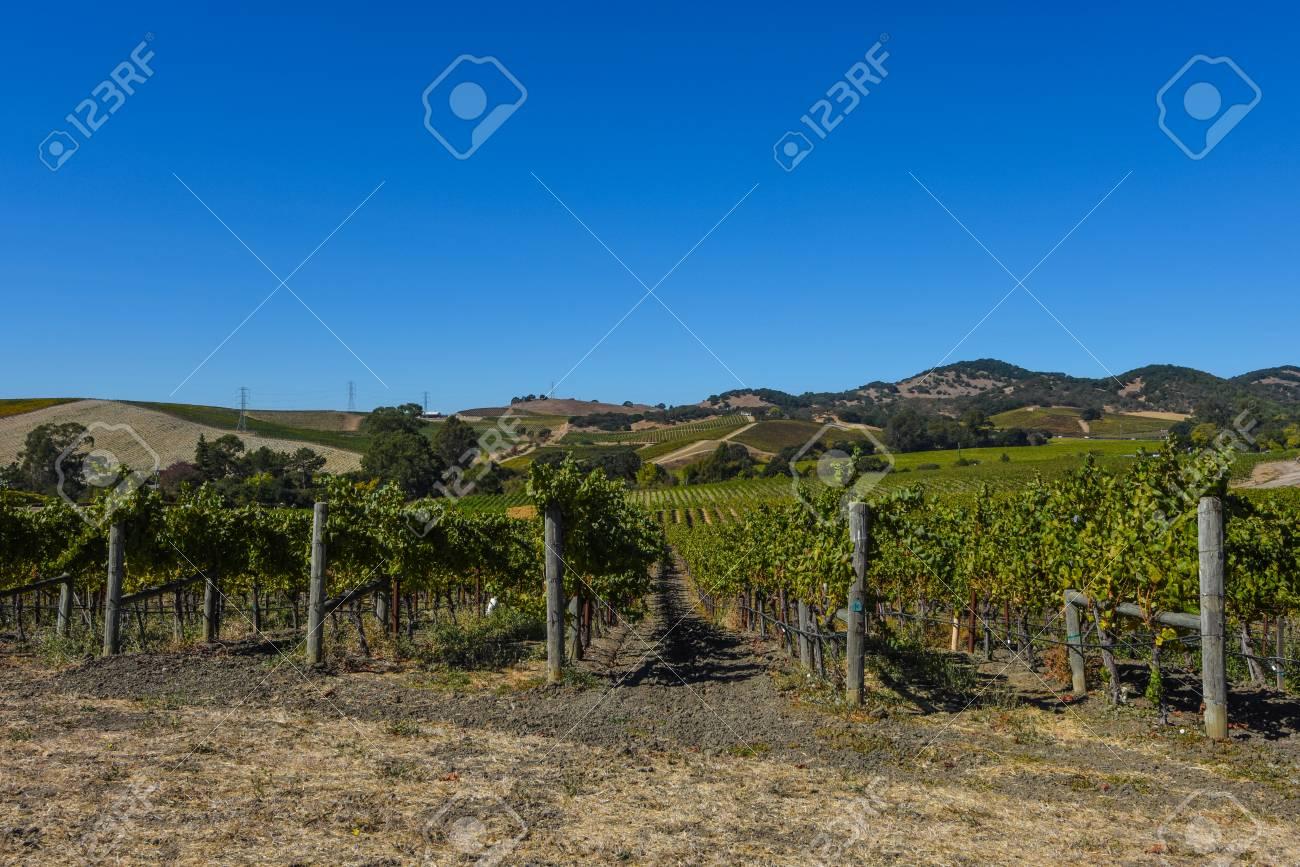 Napa Valley Vineyard - 63468292