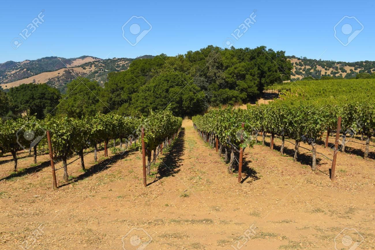 Napa Valley California Vineyard - 63468305