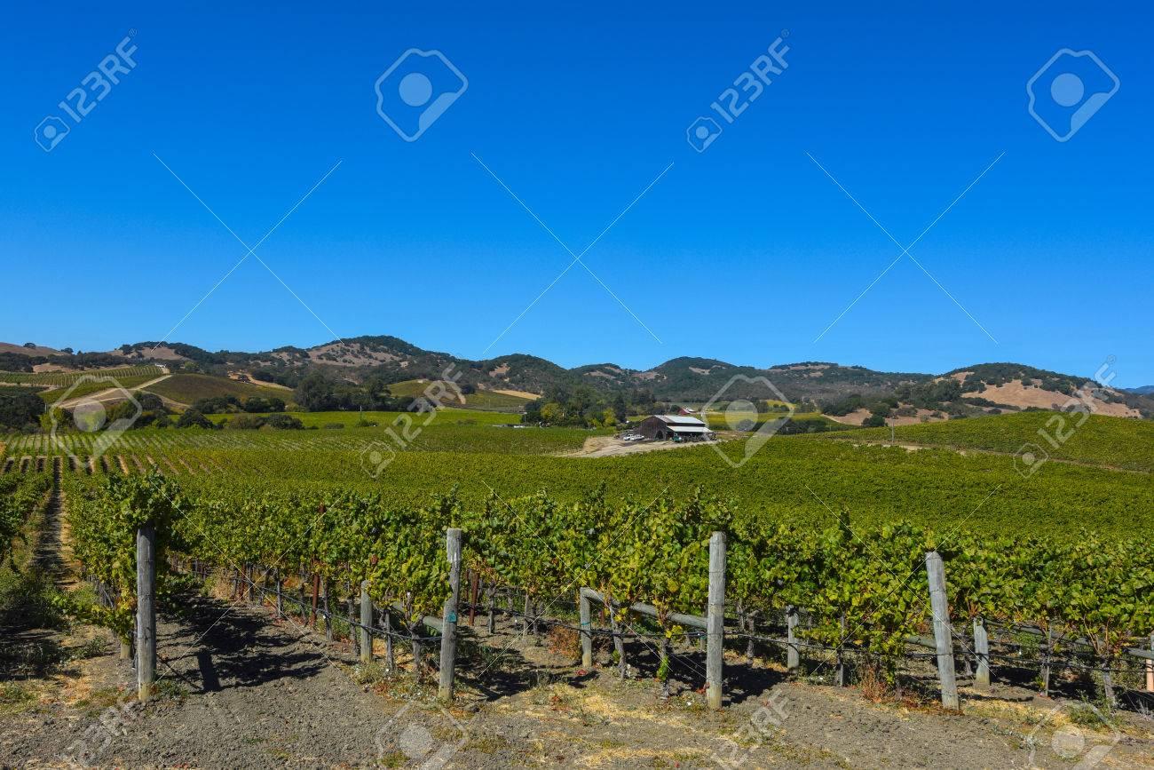 Napa Valley Vineyard - 63468314
