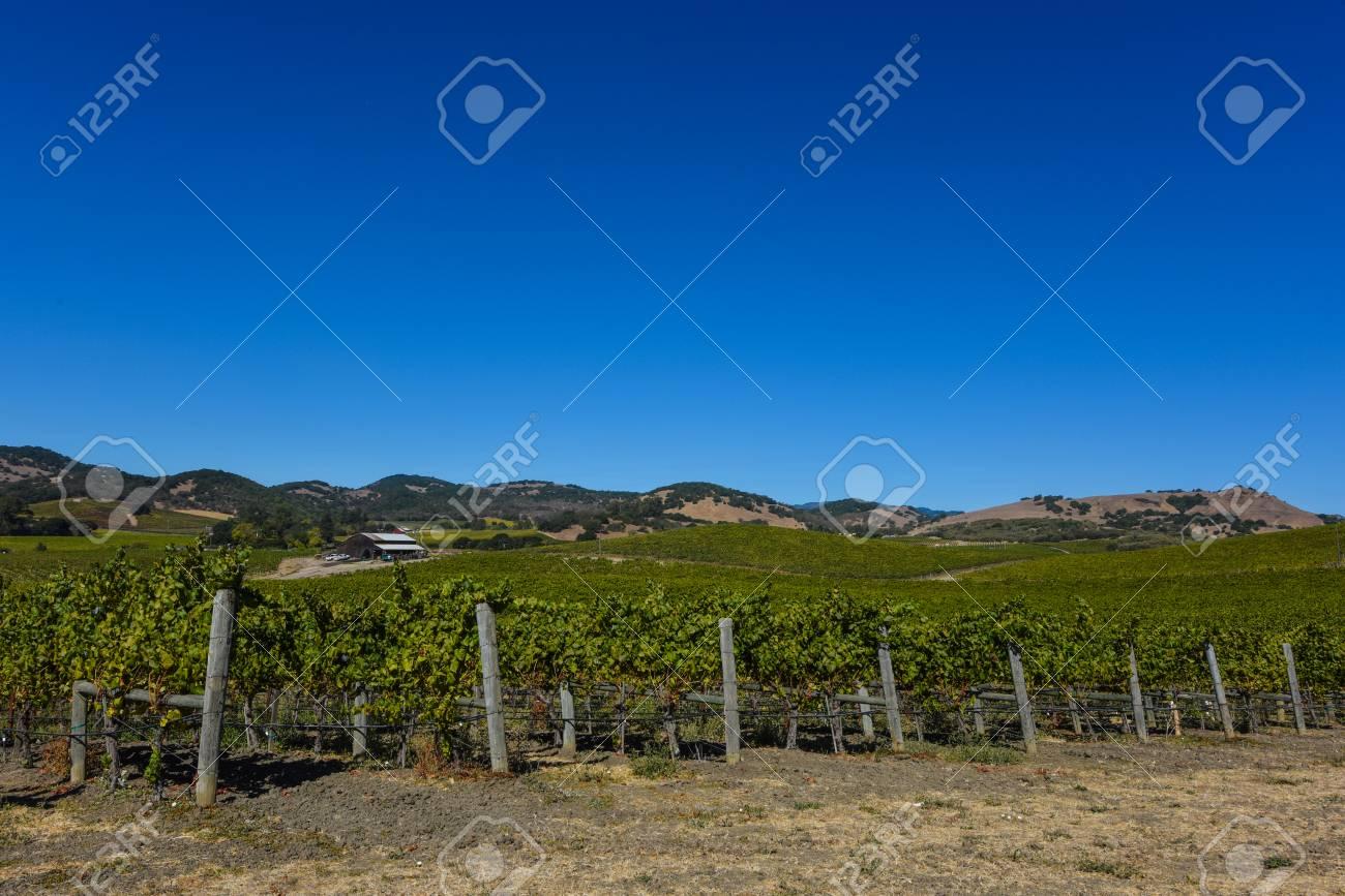 Napa Valley Vineyard - 63468356