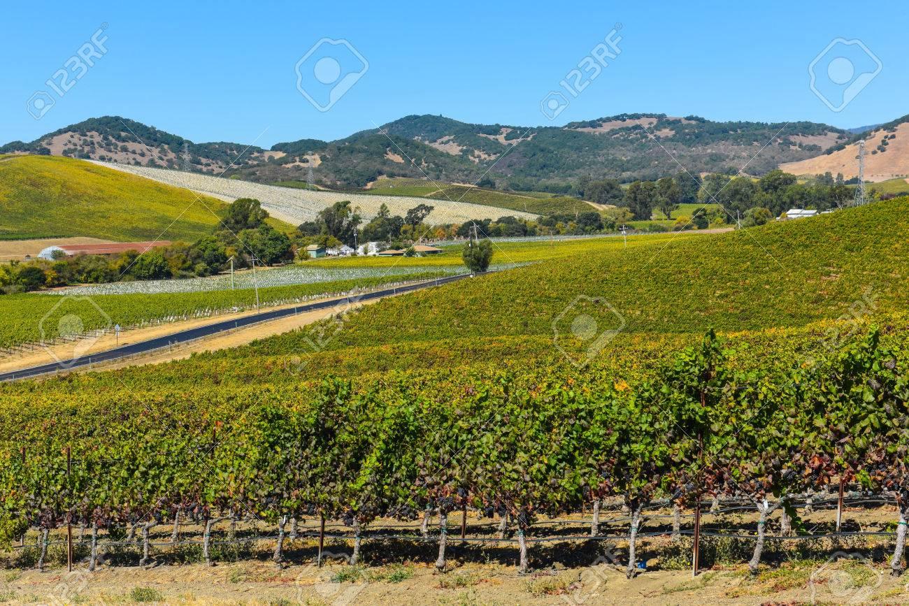 Napa Valley Vineyard - 63468359