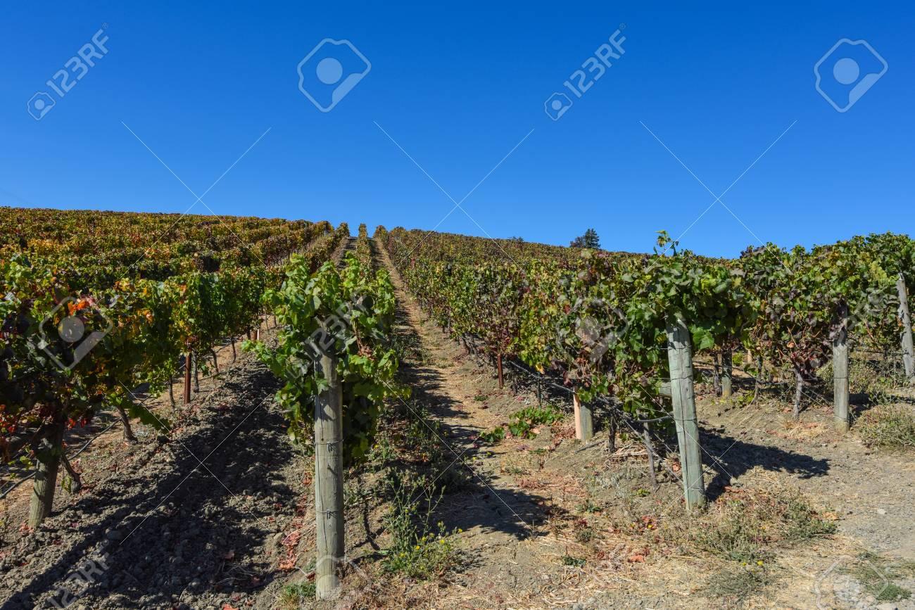 Napa Valley Vineyard - 63468362