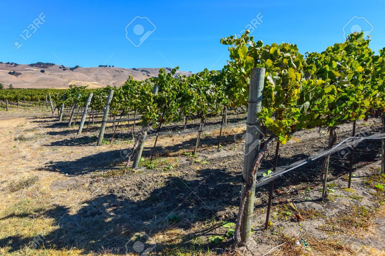 Napa Valley Vineyard - 63468372