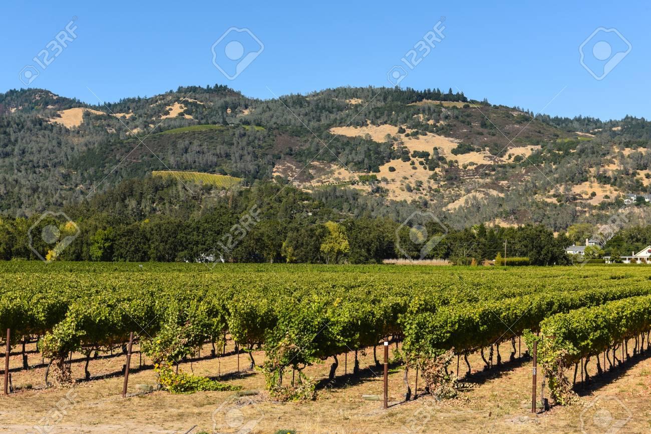 Napa Valley California Vineyard - 63468373