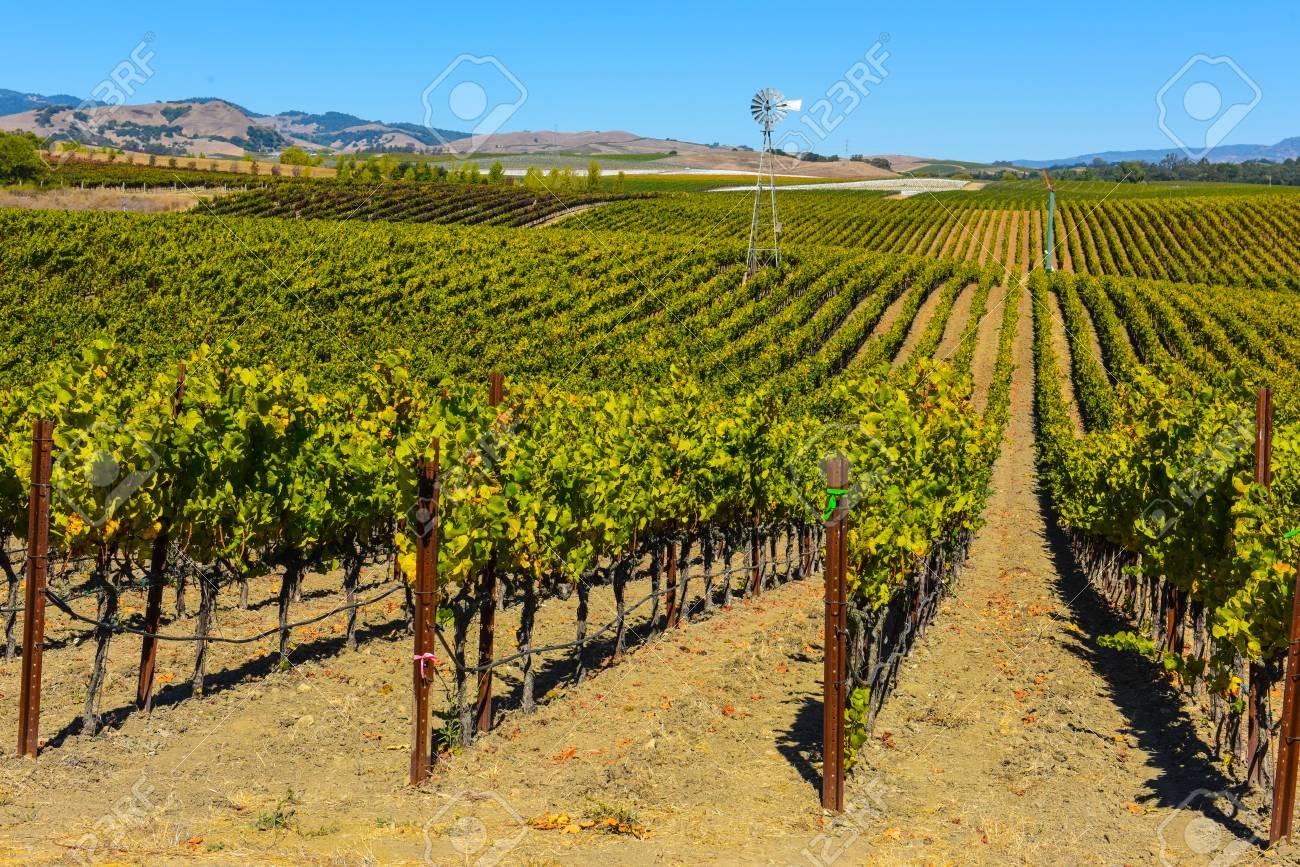 Vineyard in Napa Valley California - 63468382