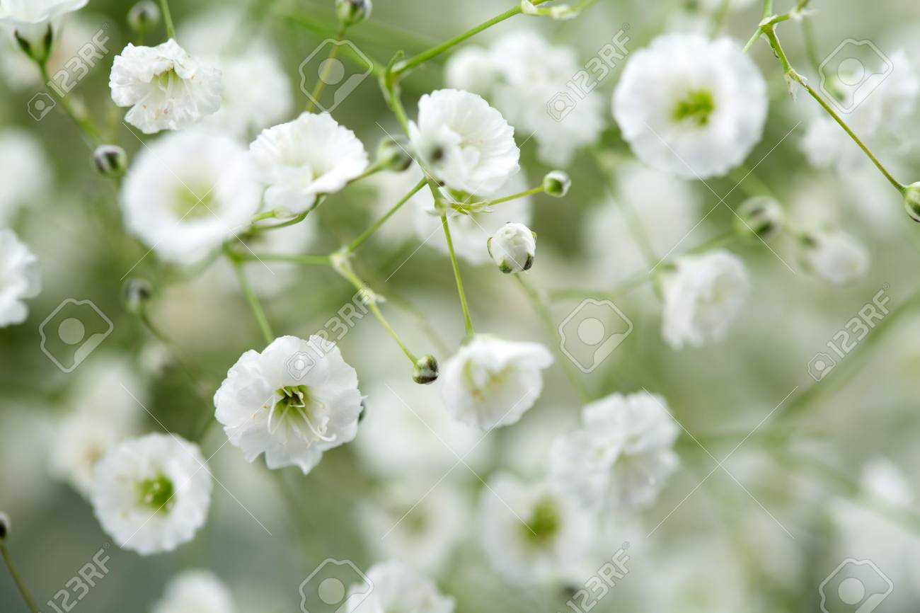 Flower Pattern Shot In Studio Background Wallpaper Full Shot Stock Photo Picture And Royalty Free Image Image 85326652