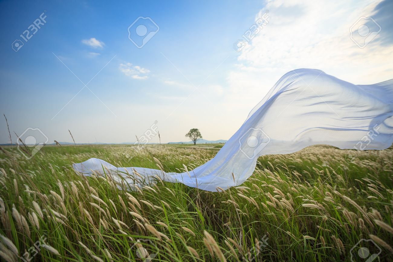 White Fabric Blowing In The Wind In The Reed Field Stock Photo Picture And Royalty Free Image Image 84795065
