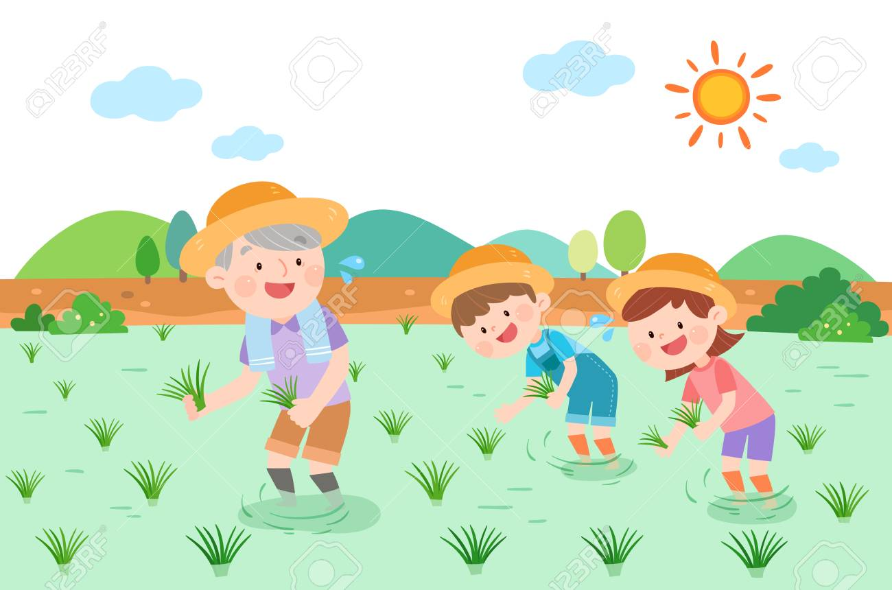 Large Family Planting Rice Vector Illustration Royalty Free