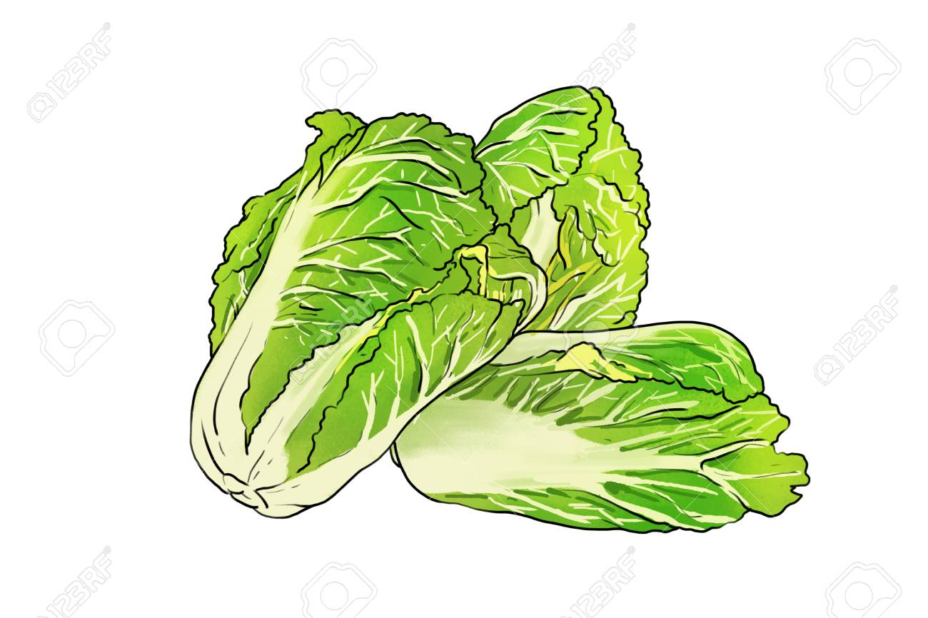 Cabbage icon - 95440880