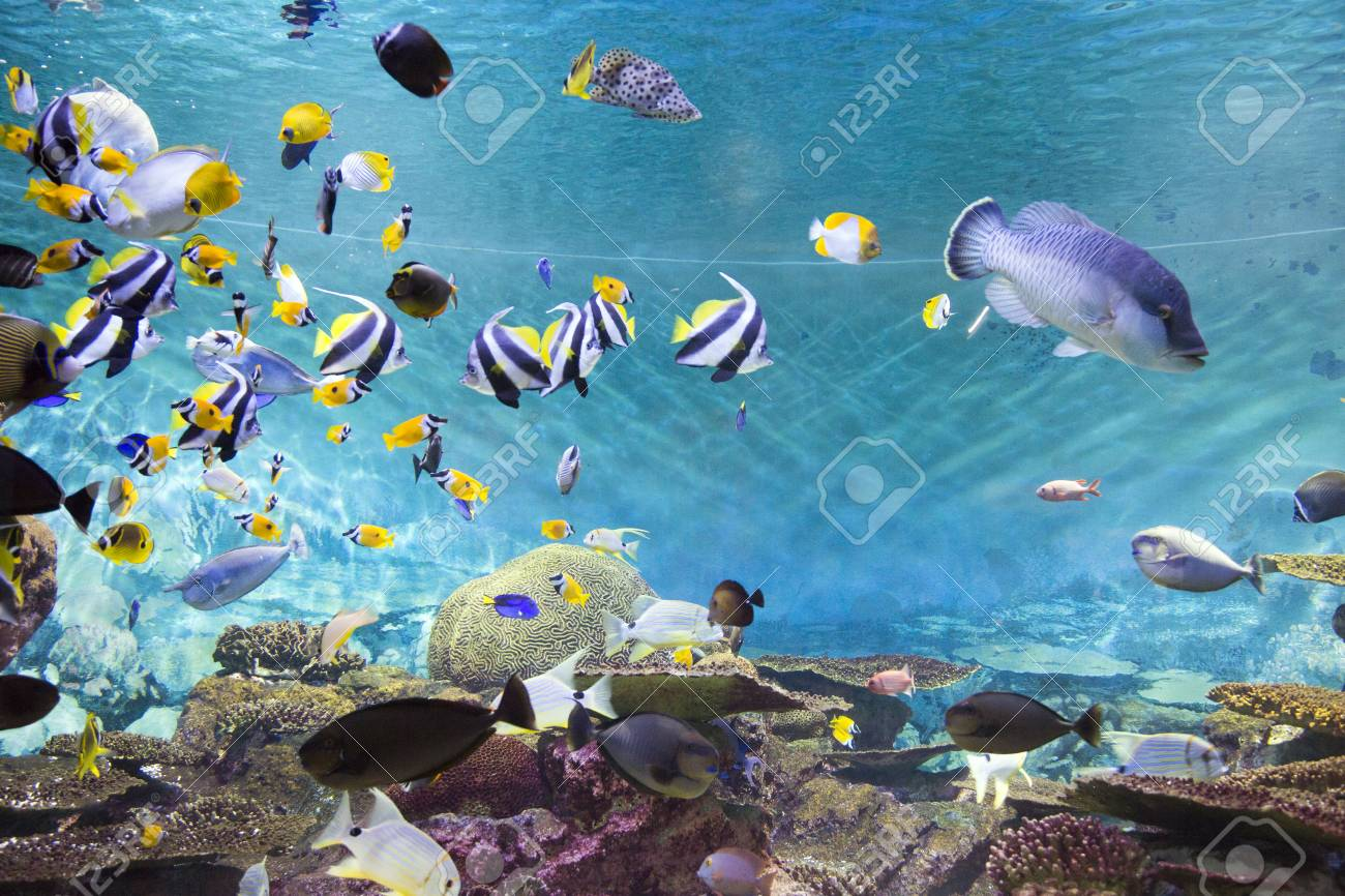 Various Marine Life Tropical Fish Turtle Jellyfish Stingray Stock Photo Picture And Royalty Free Image Image 97325995