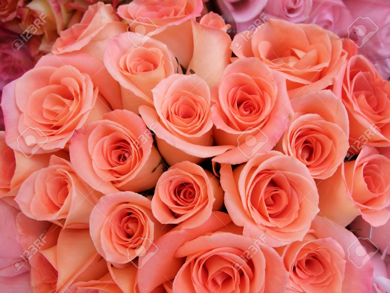 A Bouquet Of Peach Colored Roses Stock Photo, Picture And Royalty ...