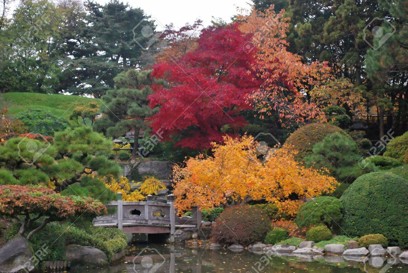 bursts of color in fall foliage in traditional japanese landscape