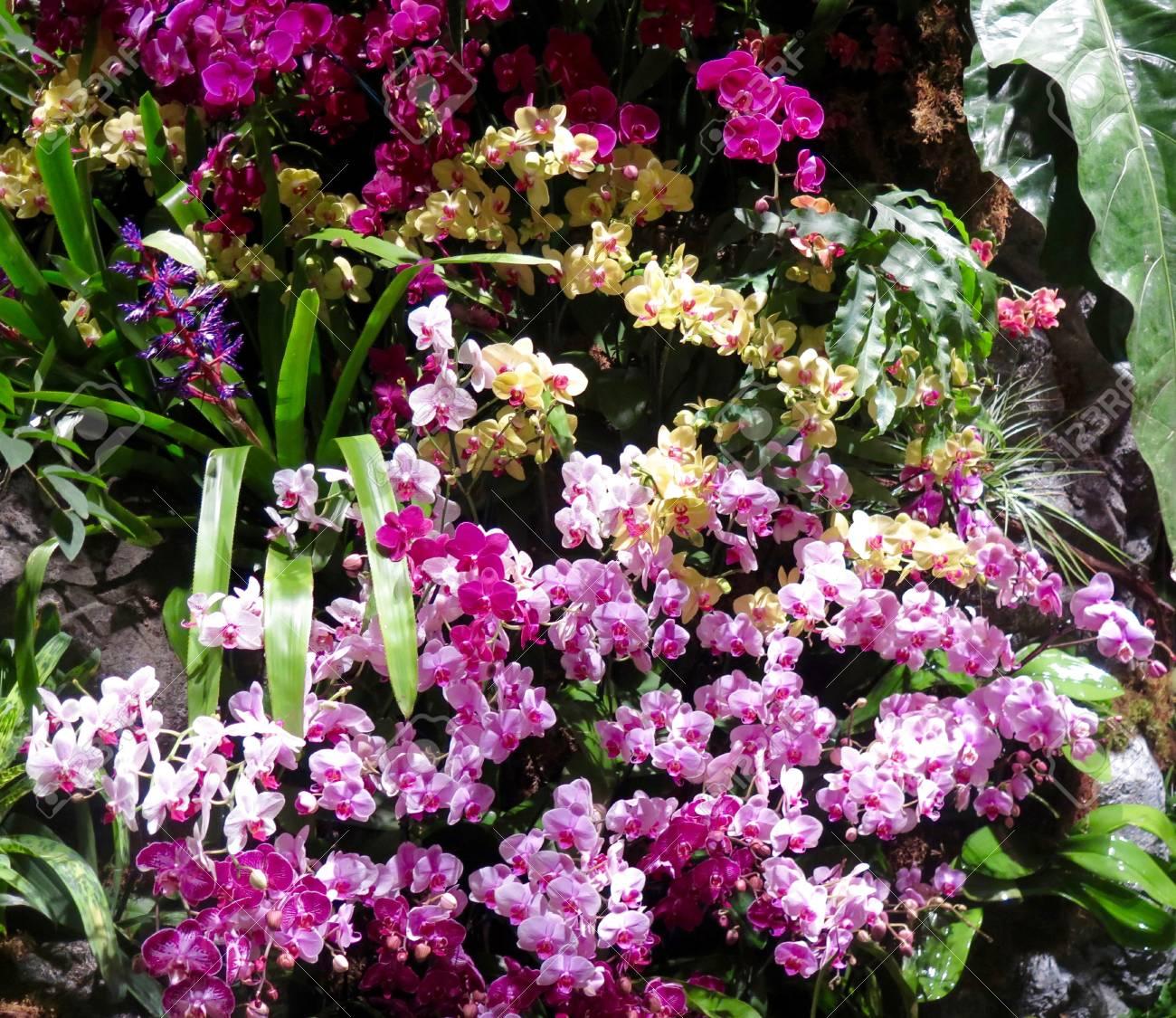Jardin: orchidées exotiques cultivés dans un environnement à effet de serre