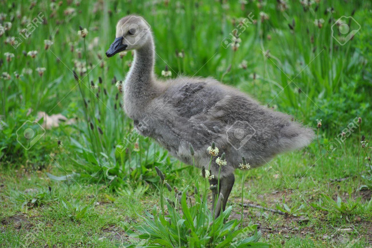 Goose stocks canada goose stocks biocorpaavc Gallery
