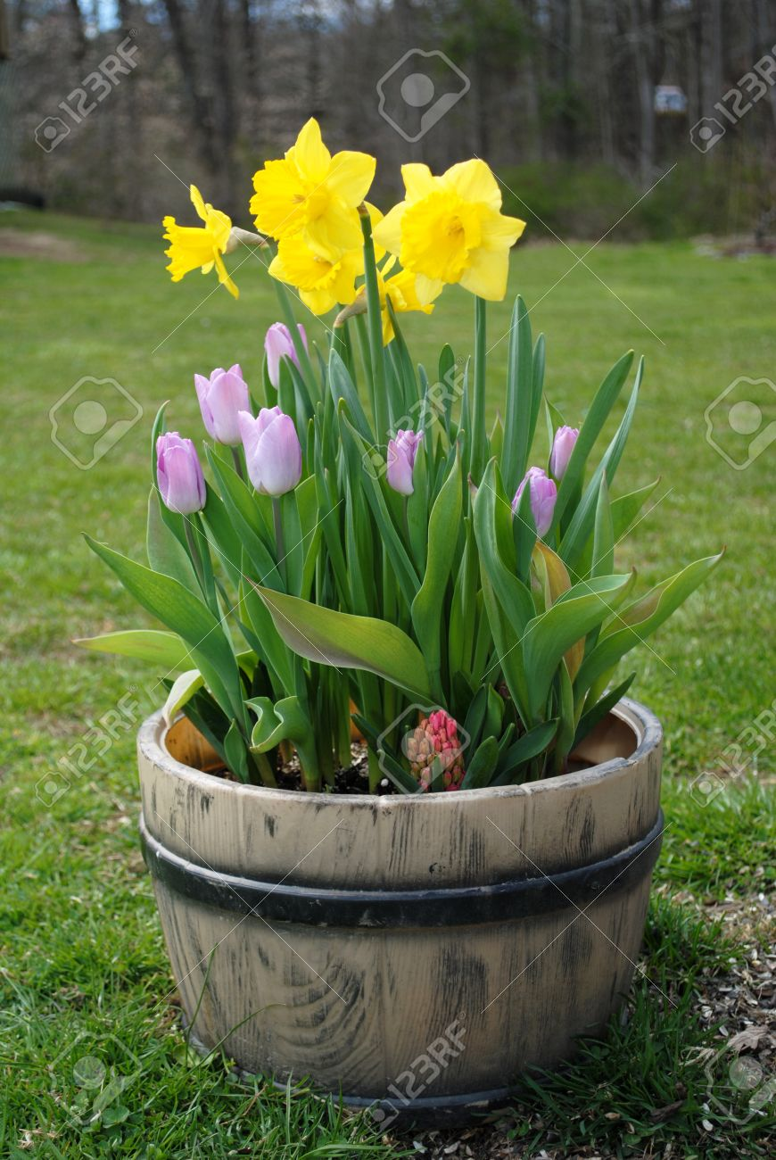Spring potted flowers stock photo picture and royalty free image spring potted flowers stock photo 25850380 mightylinksfo