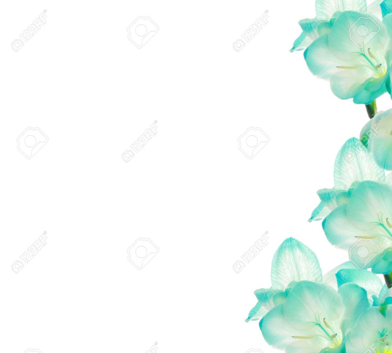 Fresia Flower Border Design Isolated On White Stock Photo