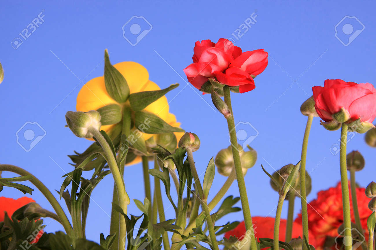Spring flowers against clear blue sky Stock Photo - 4738531