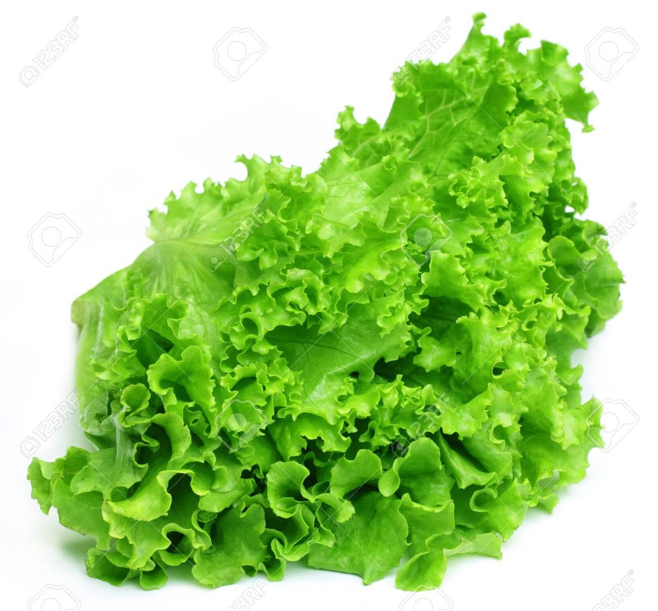 Fresh lettuce Stock Photo - 17111962