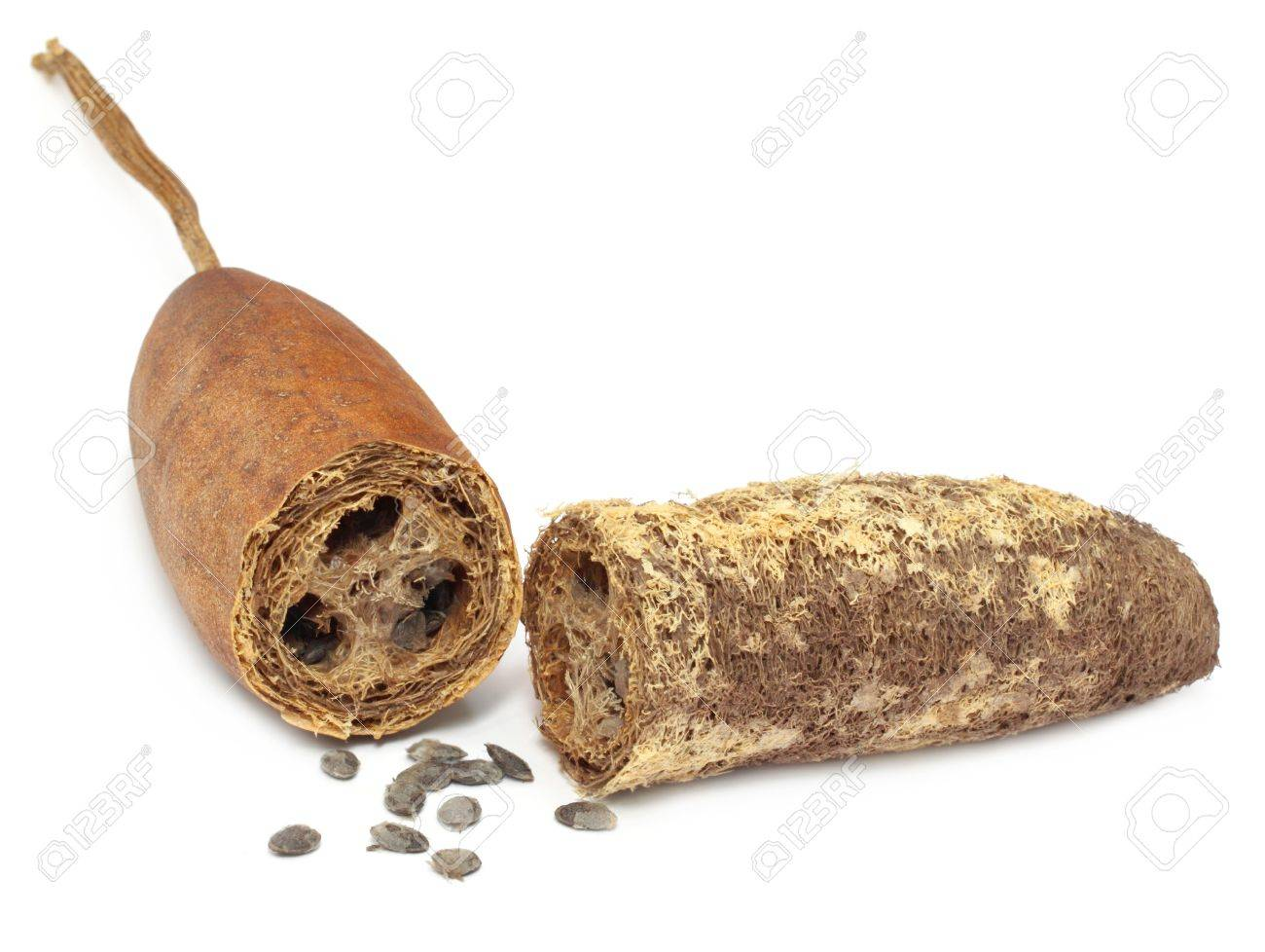 Natural Scrubber of dried ridge gourd Stock Photo - 17151980